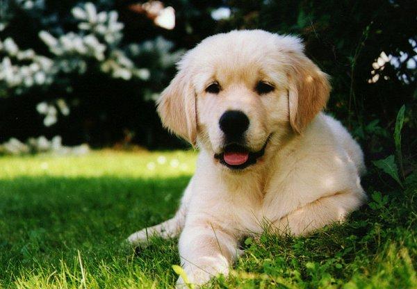puppie2